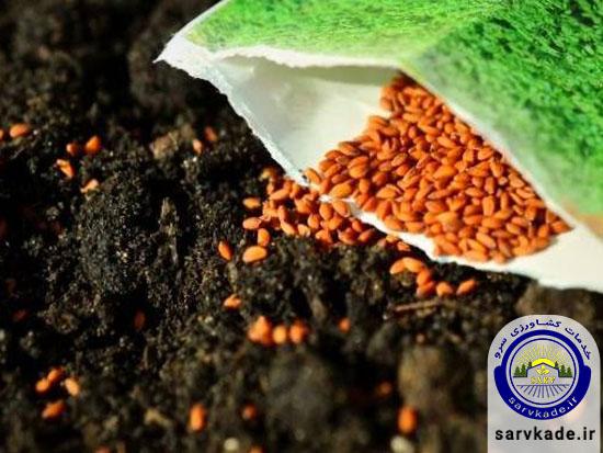 ضدعفونی بذر