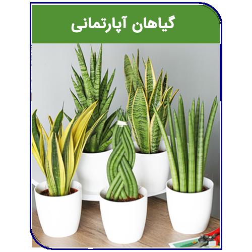 sarv-maghaleh1